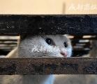 黄平富照片资料 伪爱猫人每天杀猫100只
